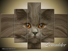 Obraz na zeď-zvířata- 5D F001132
