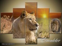 Obraz na zeď-zvířata- 5D F001216