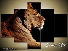 Obraz na zeď-zvířata- 5D F001402