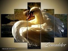 Obraz na zeď-zvířata- 5D F001428