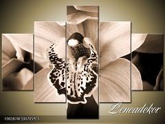 Obraz na zeď-sépiové tóny-5D F001874