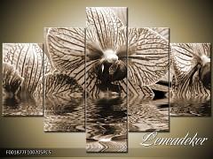Obraz na zeď-sépiové tóny-5D F001877