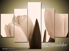 Obraz na zeď-sépiové tóny-5D F001883