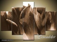 Obraz na zeď-sépiové tóny-5D F001884