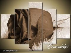 Obraz na zeď-sépiové tóny-5D F001886