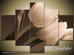 Obraz na zeď sépiové tóny 5D F001890F100705PCS