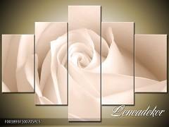 Obraz na zeď-sépiové tóny-5D F001893