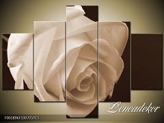 Obraz na zeď-sépiové tóny-5D F001896