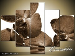 Obraz na zeď-sépiové tóny-5D F001901
