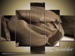 Obraz na zeď-sépiové tóny-5D F001910