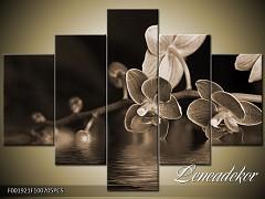 Obraz na zeď-sépiové tóny-5D F001921