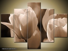 Obraz na zeď-sépiové tóny-5D F001923