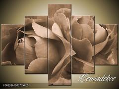Obraz na zeď-sépiové tóny-5D F001926